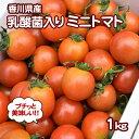 【ふるさと納税】令和元年初物「はなまる農園のミニトマト500...