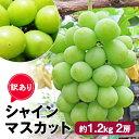【ふるさと納税】ちょっと訳あり[シャインマスカット]約1.2kg2房 【果物類・フルーツ・訳あり・ブドウ・マスカット・ぶどう・シャインマスカット】 お届け:8月下旬~9月下旬