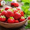【ふるさと納税】香川県オリジナル品種 さぬきひめ 2kg(1...