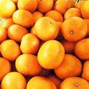 【ふるさと納税】愛媛の高級柑橘の代名詞 「せとか」約3.5kg入【1046129】
