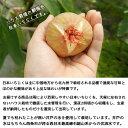 愛媛産甘夏缶詰12個入【送料無料】