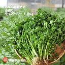 【ふるさと納税】<西条名水育ちの山盛り生パクチー 1.5kg...