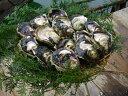 【ふるさと納税】岩がき(殻付3kg) 【魚貝類・生牡蠣・かき...