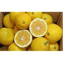 【ふるさと納税】愛南産の河内晩柑10kg 【果物類・柑橘類・フルーツ】 お届け:2021年4月中旬〜8月上旬