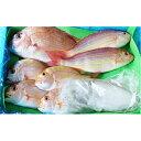【ふるさと納税】朝市・朝競り・朝出荷!目利きの鮮魚「B」セット 【魚介類】