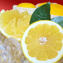 【ふるさと納税】愛南ゴールド(愛南産の河内晩柑)8kg 【果物類・みかん・柑橘類・くだもの・フルーツ...