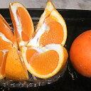 【ふるさと納税】【数量限定】愛南産 ブラッドオレンジ(タロッコ)5kg 【果物類・柑橘類・オレンジ・フルーツ】 お届け:2020年4月1..
