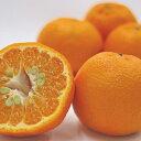 【ふるさと納税】愛南育ち 吉田農園 ポンカン 約10kg 【果物類・柑橘類・フルーツ】 お届け:2021年1月下旬〜2021年2月下旬