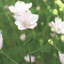 【ふるさと納税】さくらひめ生花 【花・植物・雑貨・日用品】 お届け:2020年1月上旬〜2020年5月中旬