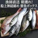 【ふるさと納税】漁師直送 「朝どれ神経締め!鮮魚ボックス」 ...