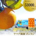 ショッピングふるさと納税 【ふるさと納税】大人気 安和ポンカン 15kg秀品 産地直送 柑橘 フルーツ みかん 送料無料