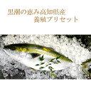 【ふるさと納税】「育成にこだわった匠の育魚」匠の鰤(ぶり)セ...