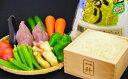 ショッピング定期便 【ふるさと納税】定期便 3ヶ月 とれたて新鮮!旬の朝採れ野菜と高知県産コシヒカリ5kg お試し