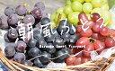 【ふるさと納税】【2020年夏お届け分】潮風®ぶどう ピオーネ 1.6kg