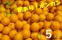 【ふるさと納税】訳あり柑橘「ぽんかん」5kg(オレンジ園)【L-54】