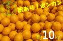 【ふるさと納税】訳あり柑橘「ぽんかん」10kg(オレンジ園)【E-16】