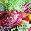 【ふるさと納税】【野菜12ヶ月定期便】香南市のお野菜詰め合わせコース【送料無料】 12回 配達 旬