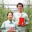 【ふるさと納税】ミニフルーツトマト トマト 糖度 高め スッキリ乙女の涙 スウィーティア(トマト)6袋送料無料