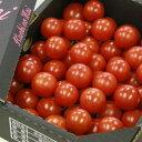 【ふるさと納税】高糖度&高機能性 フルーツトマト1Kg 完熟 糖度8以上 送料無料数量限定 期間限定配送 のし 包装 贈り物 対応可おやつ おかず おつまみ トマト大好き A-330