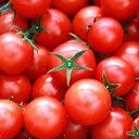 【ふるさと納税】★フルーツトマト 完熟 糖度8以上高糖度&高機能性 フルーツトマト3kg送料無料 数量限定 ギフト D-75