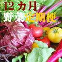 【ふるさと納税】野菜★12カ月定期便 香南市のお野菜詰め合わせコース