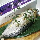 【ふるさと納税】割烹吉野 鯖・カマスの姿寿司【送料無料】