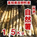 【ふるさと納税】≪予約受付中≫四国一小さなまち田野町産特選「自然薯(じねんじょ)」1.5Kg 全然粘りが違います。汁物にしても溶けな..