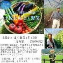 【ふるさと納税】土佐れいほく野菜(年4回)