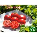 【ふるさと納税】<フルーツトマト 約1.6kg×1箱>高知県...
