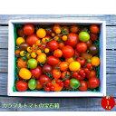 【ふるさと納税】<カラフルトマトの宝石箱 約1.0kg×1箱...