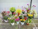 【ふるさと納税】 季節の鉢植えお楽しみセット