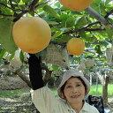 【ふるさと納税】[0350]さっぱりとした甘さの新高梨〔6玉...