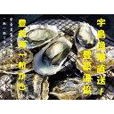 【ふるさと納税】宇島漁港直送!豊築漁協 「豊前海一粒かき」(3kg)※2020年1月~2月に順次発送予定