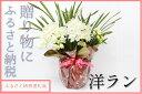 【ふるさと納税】洋ラン 草場農園(30,000円コース) 贈りもの お祝い お返し プレゼント 開店...