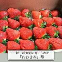 【ふるさと納税】【おおきみ】苺 270g×4パック 【果物類...