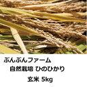 【ふるさと納税】ぶんぶんファーム 自然栽培 ひのひかり 玄米...