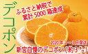 【ふるさと納税】A012.【昨年も大人気】デコポン(約3kg...