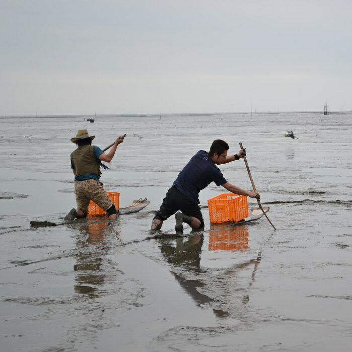 【ふるさと納税】C-12 すぼかき体験で珍魚と出会う