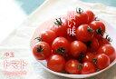 【ふるさと納税】濃い味!中トマト約1.6kg(約200g×8パ
