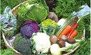 【ふるさと納税】【定期コース】よしのがり野菜セットレギュラー(24I01)