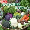 【ふるさと納税】【定期コース】よしのがり野菜セットレギュラー...
