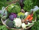 【ふるさと納税】よしのがり野菜セットショート(8品)(8A10)