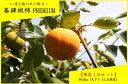 【ふるさと納税】E-042 【10セット限定】基肄城柿(きいじょうがき)プレミアム 5kg