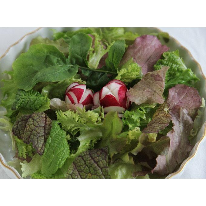 【ふるさと納税】サガンベジの満足サラダ・ミニセット 有機JAS(日本農林規格)認定の有機野菜です!(B2)