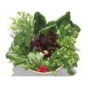 【ふるさと納税】採れたて!  葉物 野菜セット 有機栽培(日本農林規格認定)の安心・安全な野菜です(C10)