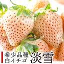 【ふるさと納税】KN002R 佐賀県産 白いちご「淡雪」(淡...
