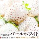【ふるさと納税】SF002R 佐賀県産 白いちご「パールホワ...