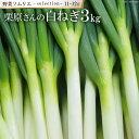 【ふるさと納税】【11~12月】野菜ソムリエselection ~栗原さんの白ねぎ~