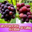 【ふるさと納税】0324.大又農園おすすめブドウ3種詰め(1.5kg)