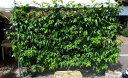 【ふるさと納税】2111.パッションフルーツの移動式緑化 (大)